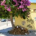 Degrado al mercato settimanale di Andria: nessuno raccoglie le frasche e la gente ci butta i rifiuti