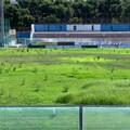"""Terreno di gioco disastroso al  """"Degli Ulivi """" di Andria: manutenzione assente e risposte che non arrivano"""