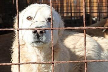 Cani Dogs's Hostel Trani