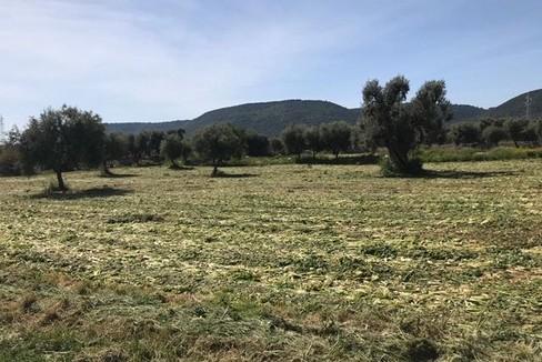 campo coltivato ad ortaggi