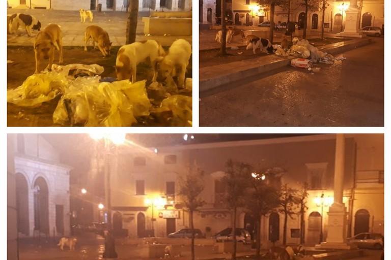 cani randagi banchettano nel centro storico