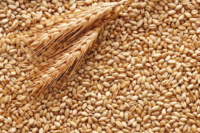 """Coldiretti, guerra del grano: """"Fuori i nomi di chi importa prodotto estero"""""""