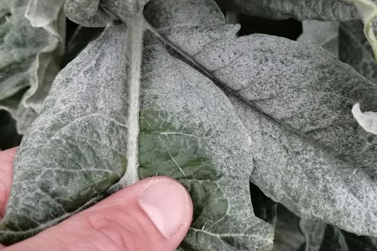 danni in agricoltura