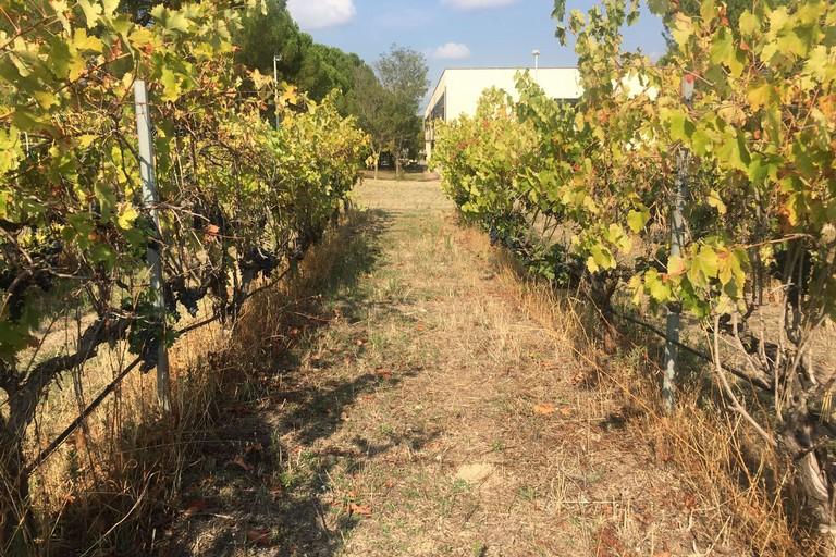 IlMovimento Turismo del Vino Pugliaa ProWein 2018