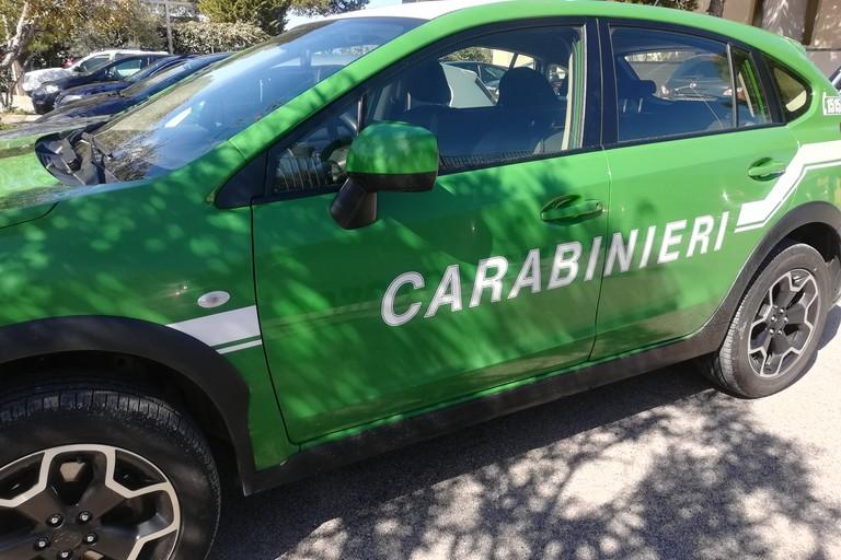 carabinieri forestali. <span>Foto Vincenzo Cassano</span>