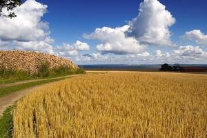 Qualità del grano, «Controlli errati e non ufficiali»