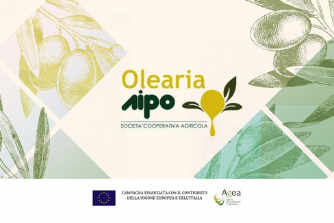 Alla scoperta del mondo olivicolo