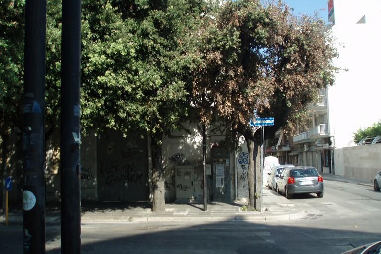 assurdità del passato: lecci piantati a 4m di distanza. <span>Foto Nicola Montepulciano</span>
