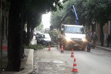 Potatura Viale Roma bloccata