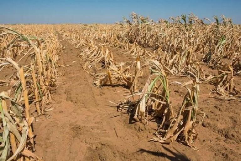 Siccità, Regione: in arrivo ulteriori agevolazioni per agricoltori