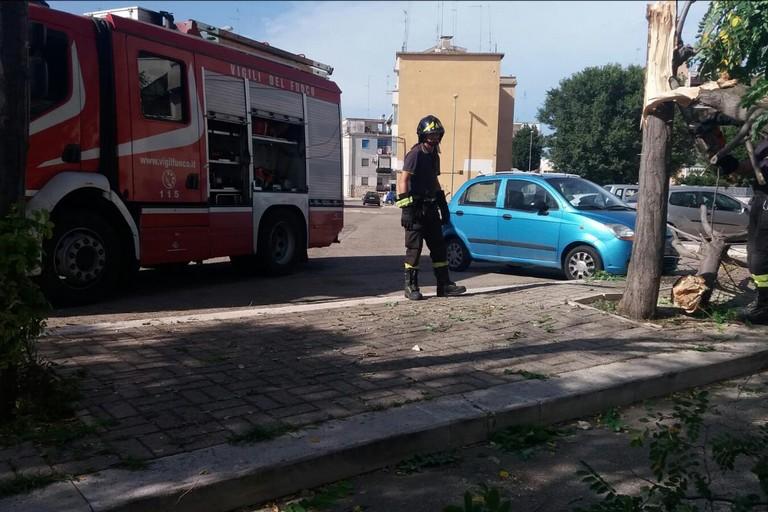 Intervento dei Vigili del Fuoco per caduta alberi in via Carpaccio