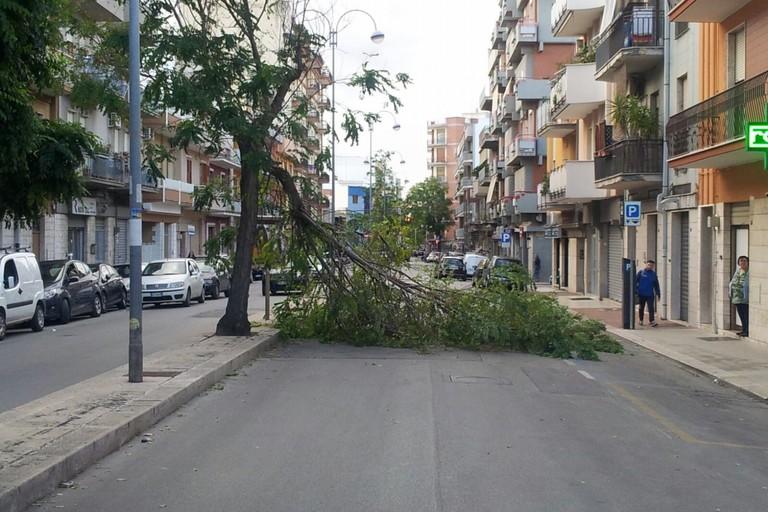 Via Montegrappa interrotta: un grande ramo sbarra la carreggiata
