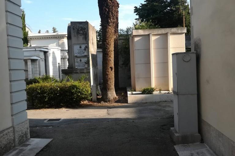palma nel cimitero comunale